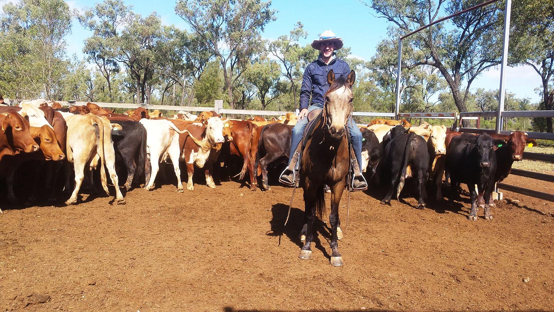 Work & Travel - Australië - boerderijwerk - paard