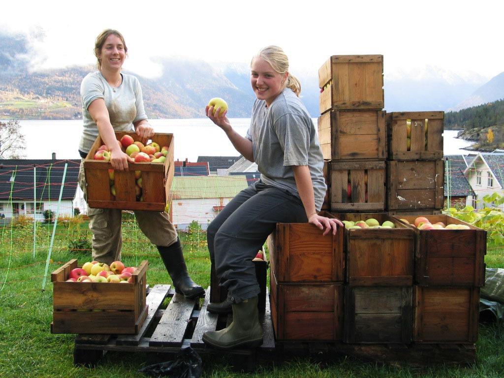 Work & Travel - Zwitserland - boerderijwerk h