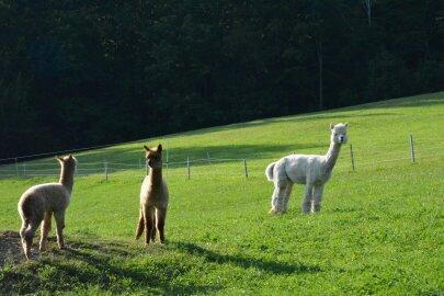 blog-boerderijwerk-zwitserland2_0