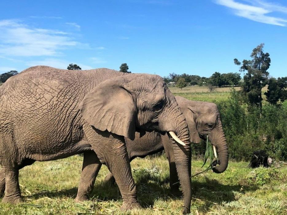 Beatrice liep stage bij onze partnerorganisatie in Zuid-Afrika 3