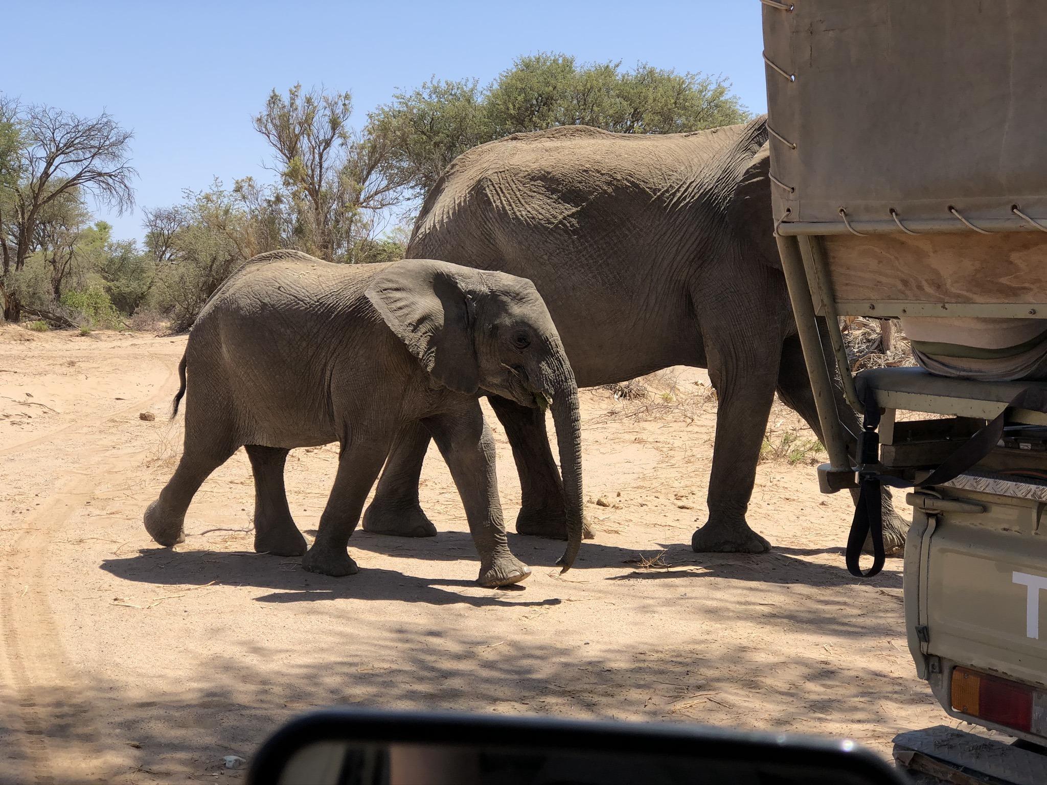 de-ervaringen-van-paulien-tijdens-het-desert-elephant-project-namibie-deel-2-1