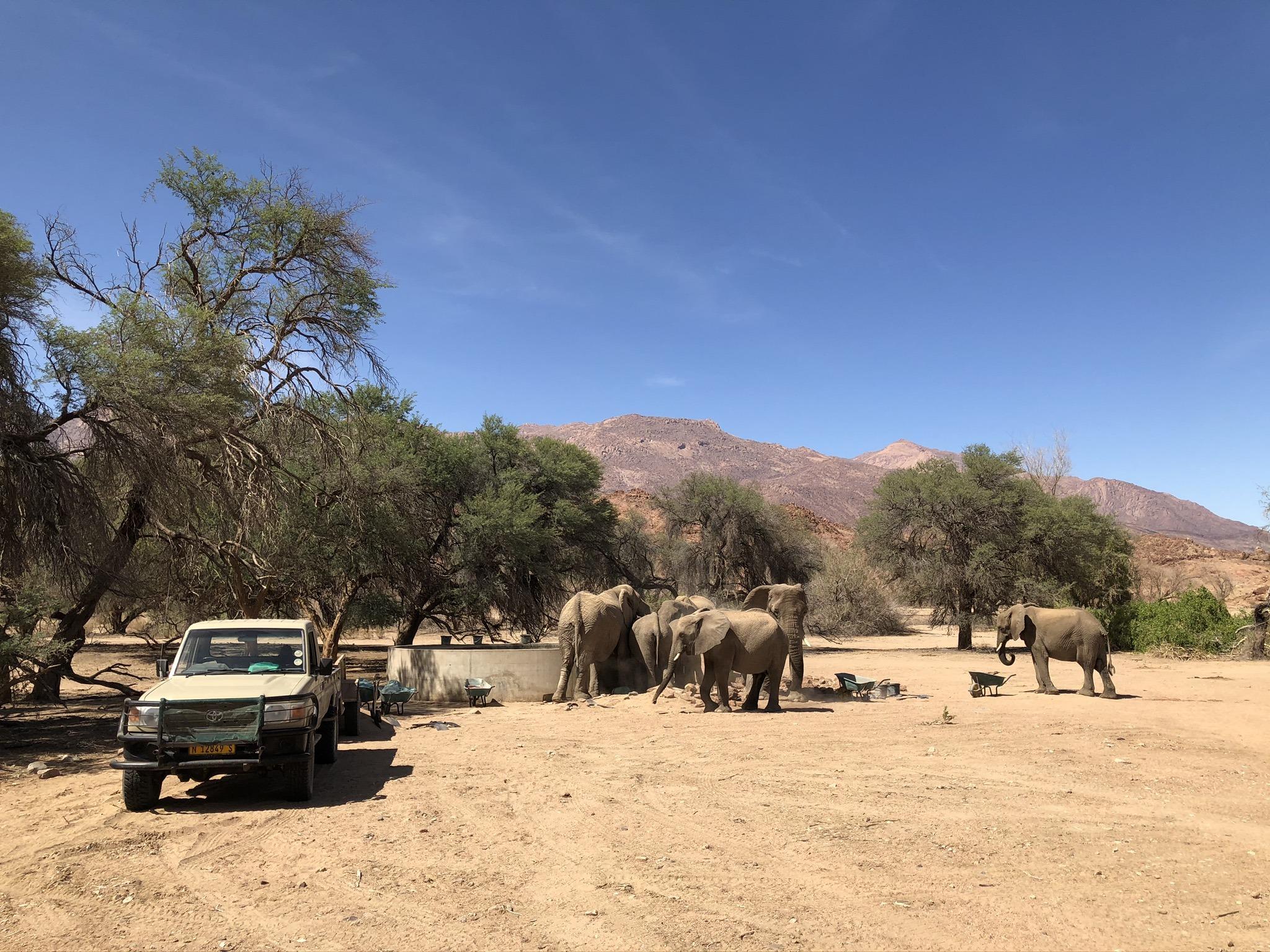 de-ervaringen-van-paulien-tijdens-het-desert-elephant-project2