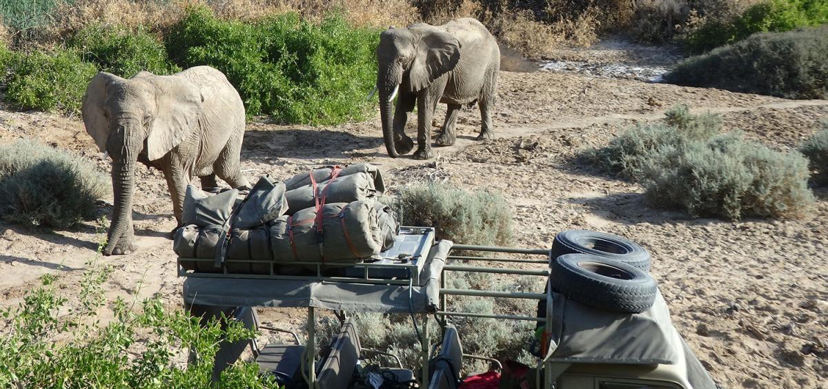 de-ervaringen-van-paulien-tijdens-het-desert-elephant-project4