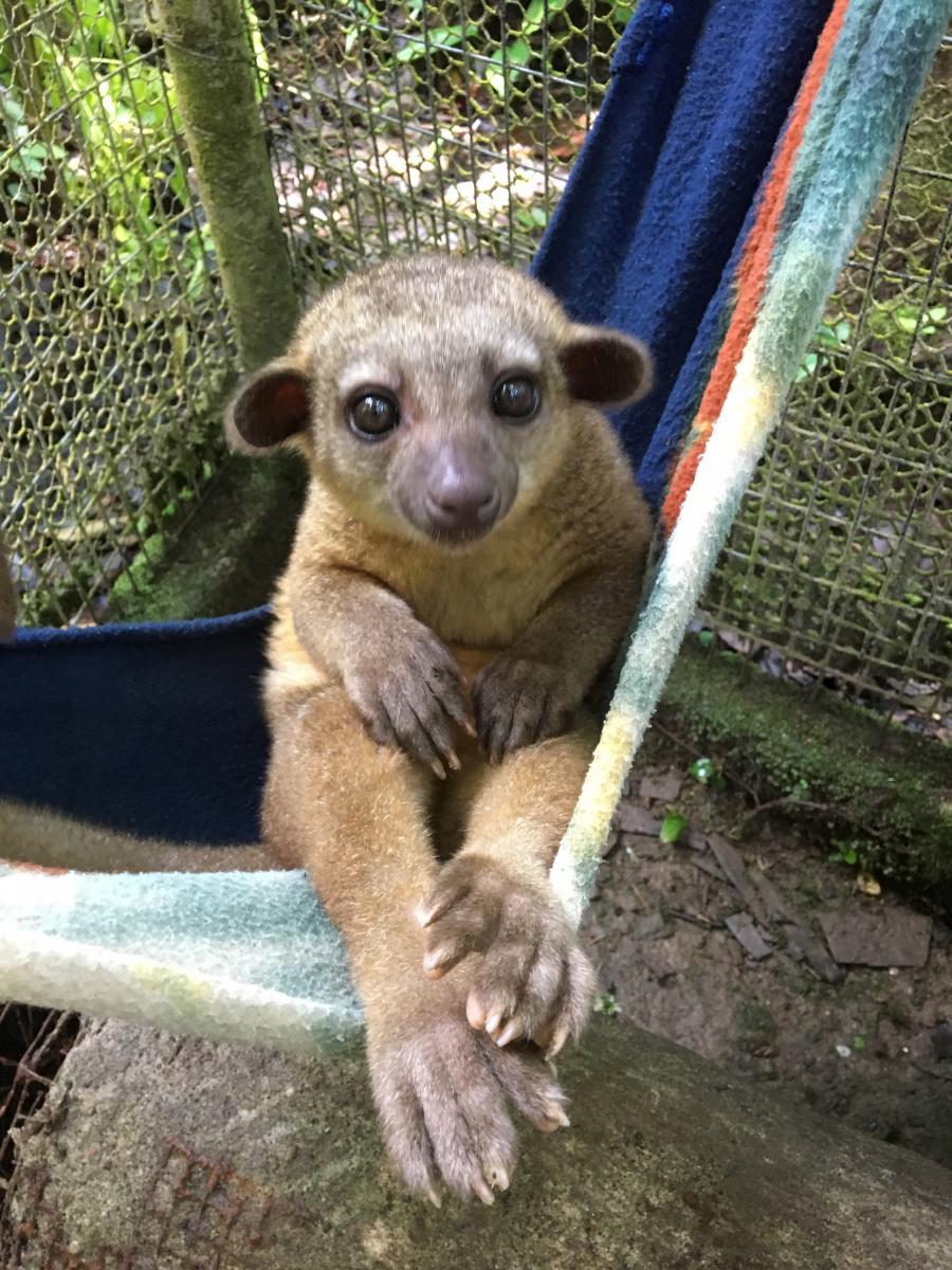 joyce-vertelt-over-het-wildlife-project-ecuador-6